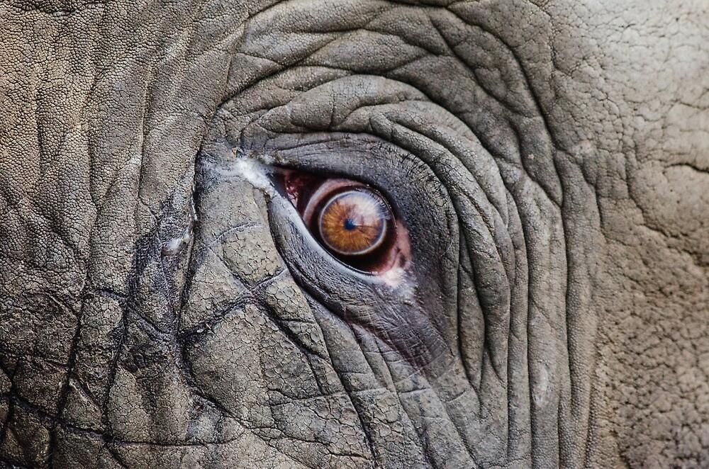 Elephant Eye by Fjfichman