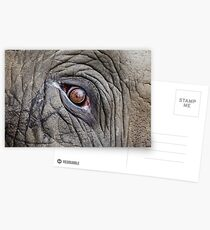 Elephant Eye Postcards