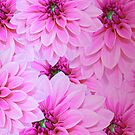 Pink Dahlias For Home Decor And Wall Art by hurmerinta