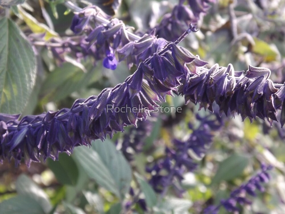 Botanical Gardens by Rochelle Stone