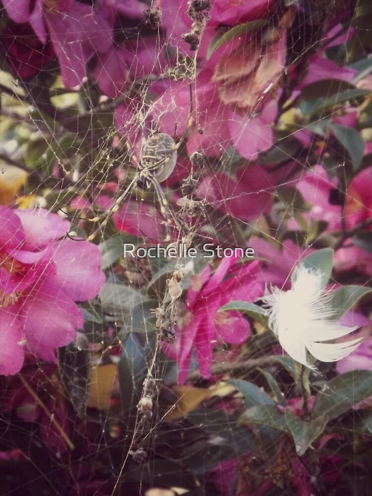 Hello Little Spider Friend by Rochelle Stone