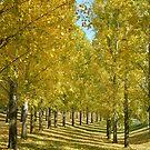 Autumn Shades by lilleesa78