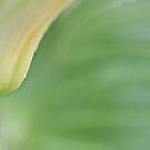 Serene Green by Dot Radley