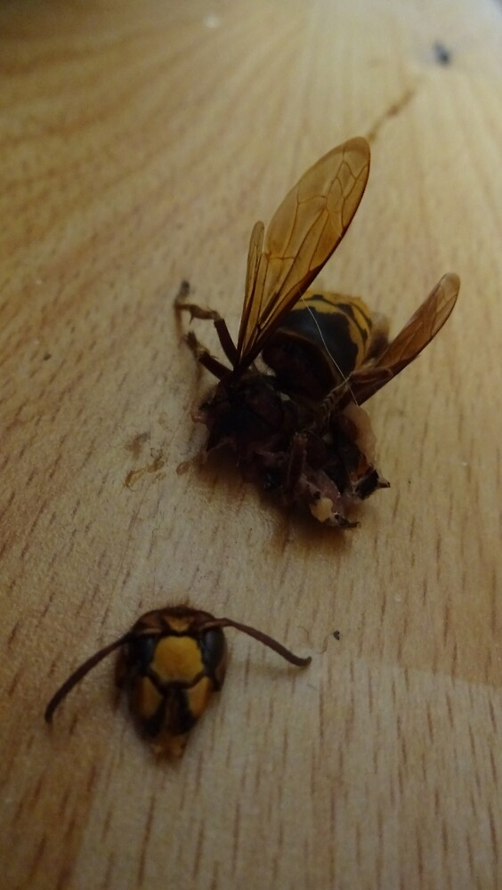 Terrible Hornet Crash by edend