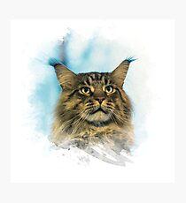 Purebred cat Photographic Print