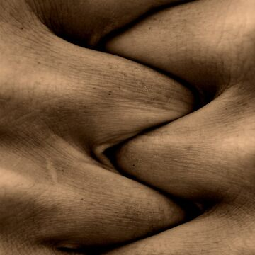 Sinuous by nord