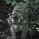 Tiger, Tiger Burning Bright by skyhorse