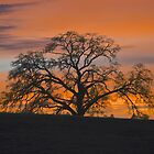 Just Another Sunset by John Butler