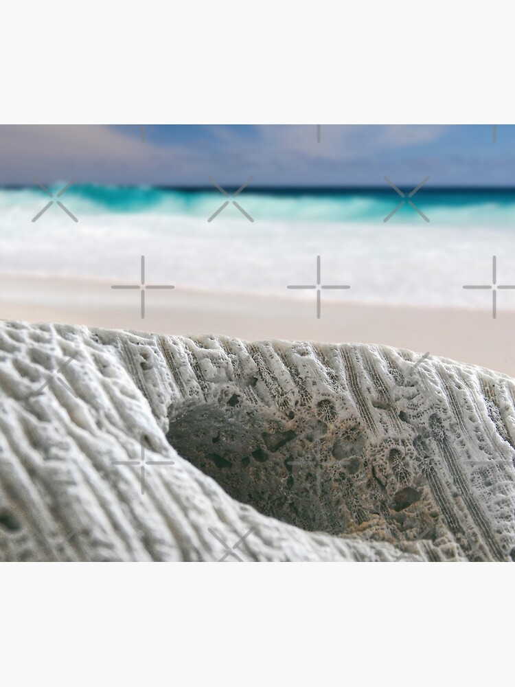 Coral By The Sea by perkinsdesigns