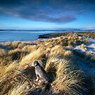 Highland Sunrise by Jeanie