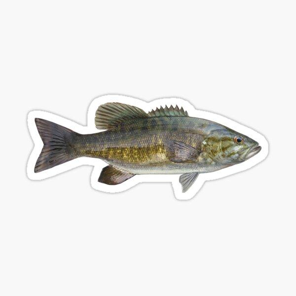 Smallmouth Bass Sticker