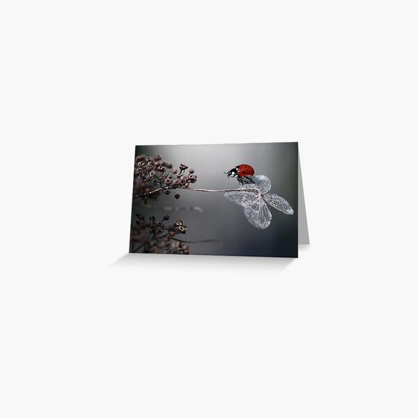 Ladybird on old hydrangea  Greeting Card