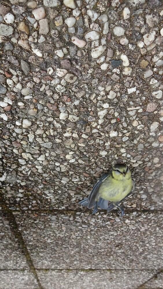 A dead bird looking still alive. by edend