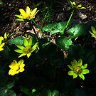 Spring flowers. by Vitta