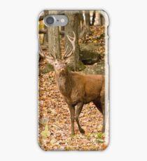 Tis the season! iPhone Case/Skin