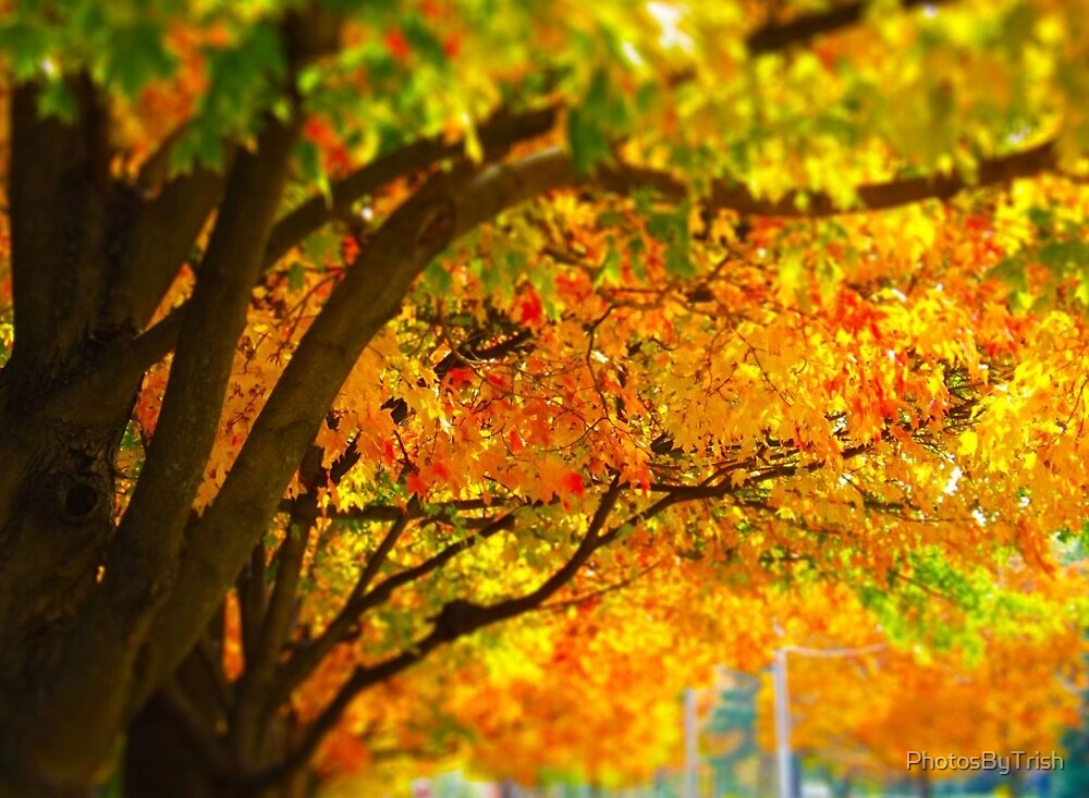 Trees and Autumn, Fall Leaves Tilt Shift by PhotosByTrish
