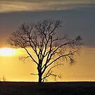 South Dakota Sunset Tree by Diane Trummer Sullivan