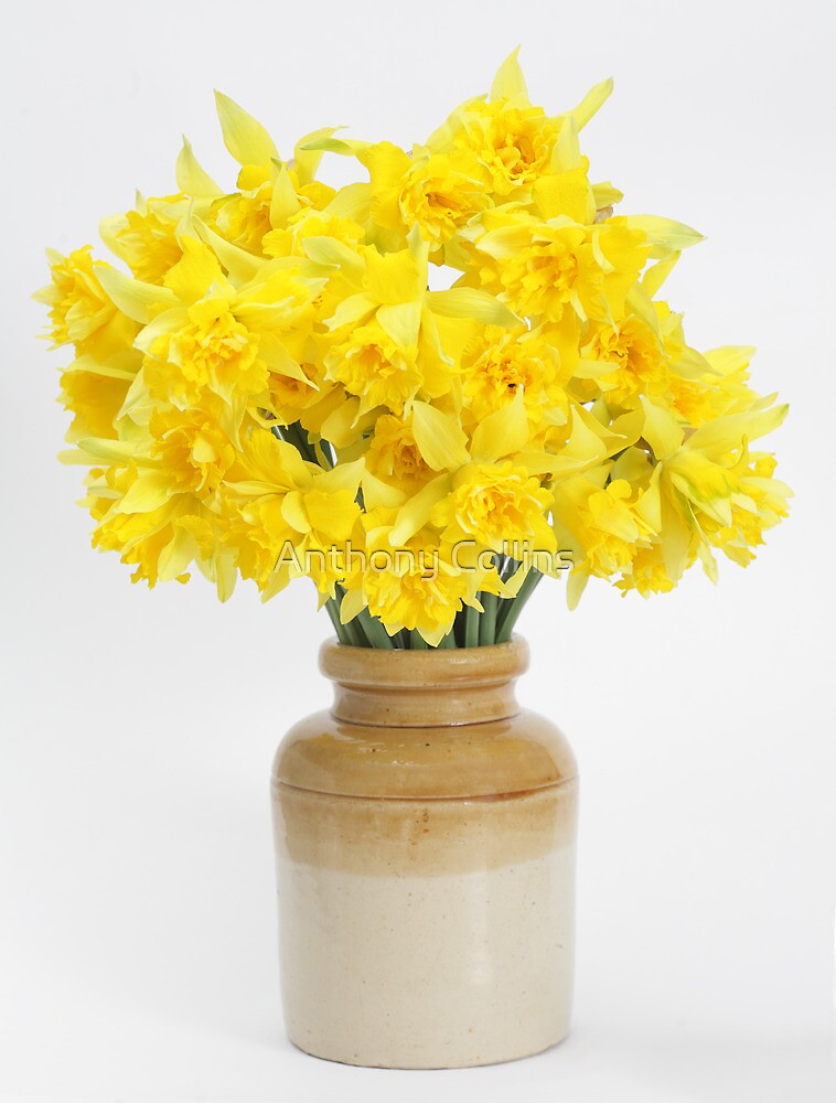 Daffodils in a Stoneware Jar by Anthony Collins