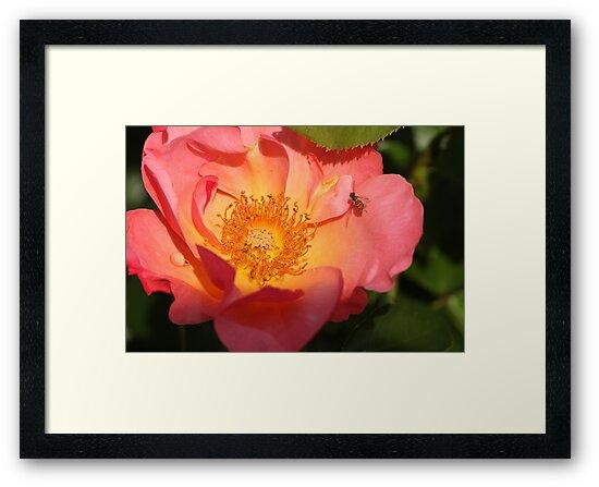Bug on Flower 2 by Gary Horner