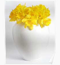 Daffodils in a White China Vase Poster