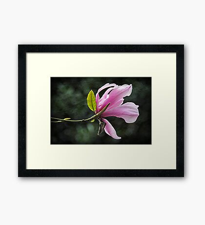 bloom in spring Framed Print
