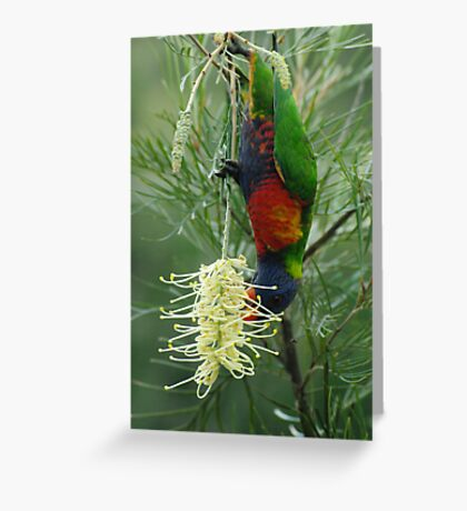 Rainbow Lorikeet  Greeting Card