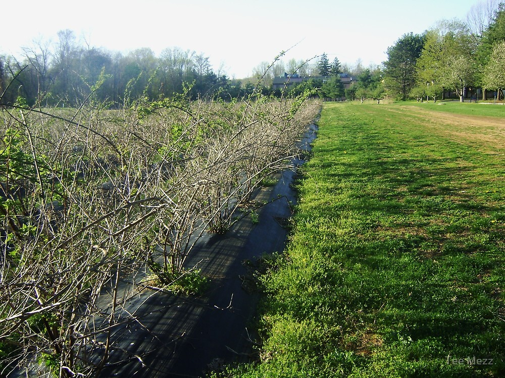 Serene Dream - Delicious Orchards NJ by Tee Mezz
