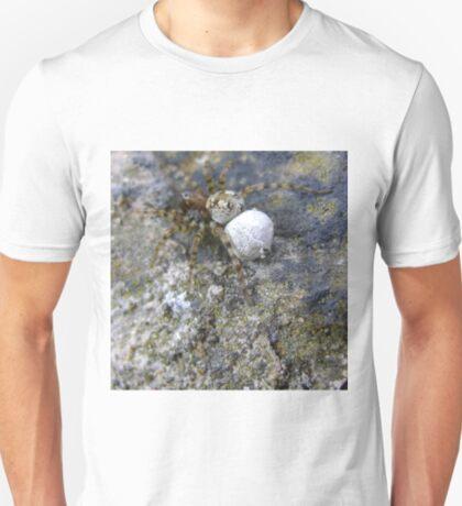 spider with egg sac (Aberdour beach) T-Shirt