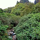 Iao Valley State Park Study 6  by Robert Meyers-Lussier