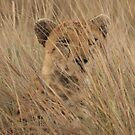 Spots in the grass by John Banks