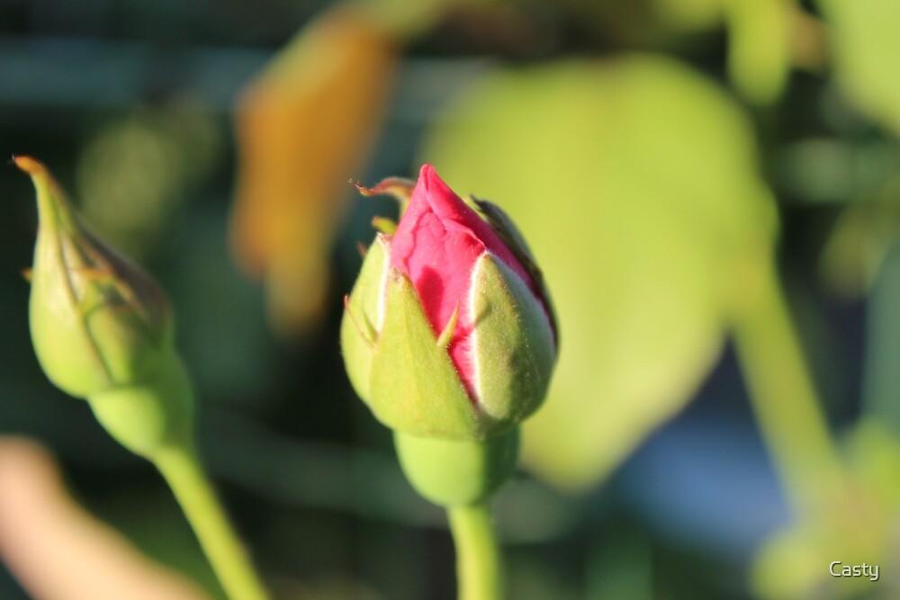 Rosebud by Casty