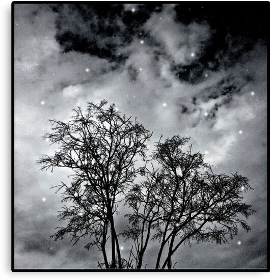 Branches to Heaven by DFLC Prints