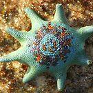 Flat  Rock Star Fish by Trish Threlfall