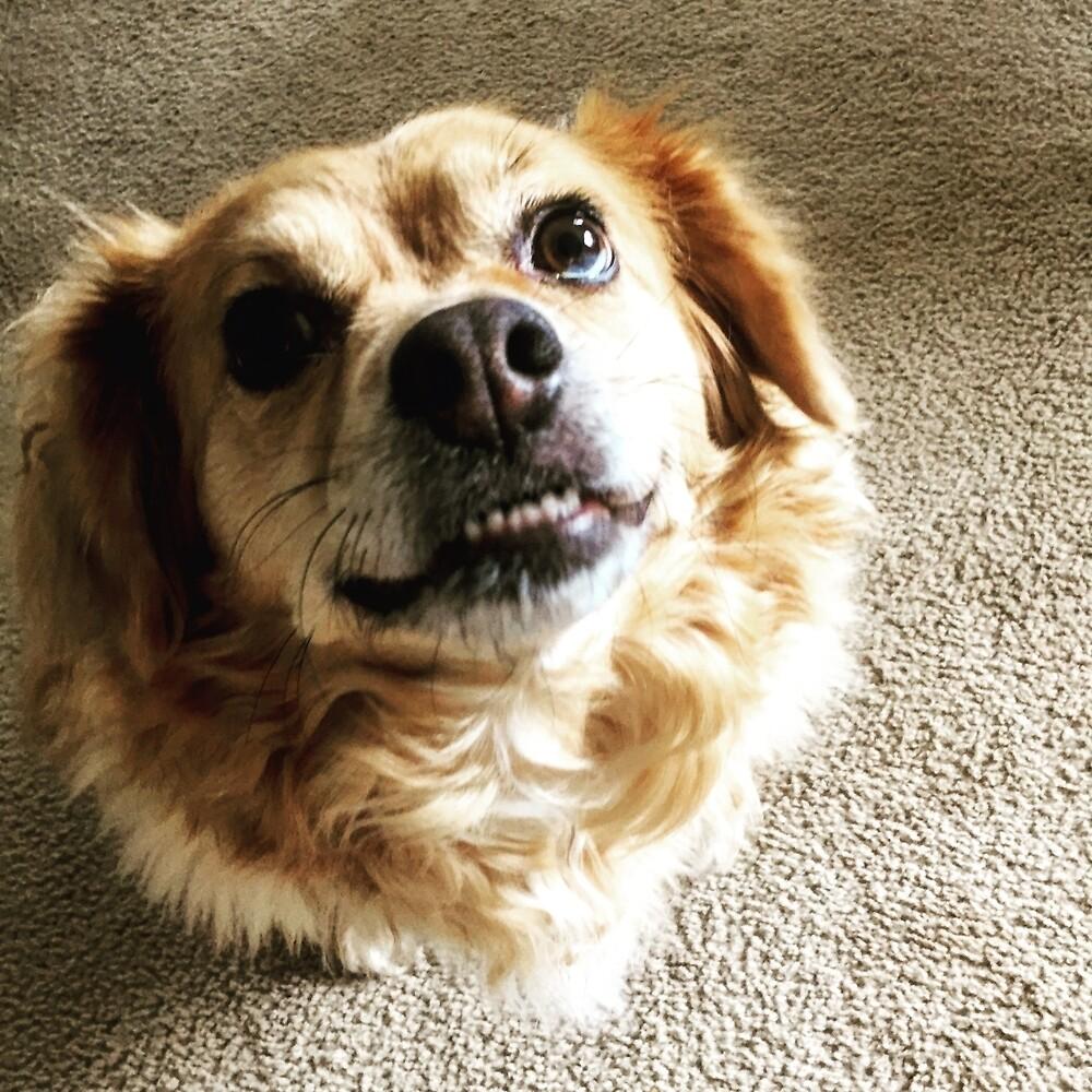Smile! It's Maisy by Courtneyrankin