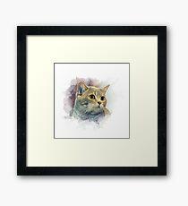Purebred cat Framed Print