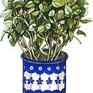 Green basil plant in a mug by stasia-ch