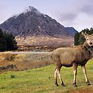 Oh Deer, it's Buachaille Etive Mòr! by Andrew Ness - www.nessphotography.com