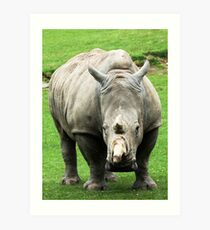 Rhinocerous 5 Art Print