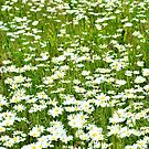 Flower Meadow - Nature and Wildlife Original photo graphic design Merchandise by VIDDAtees