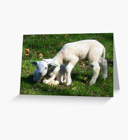 Two little Lamb Greeting Card