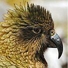 Kea Alpine Parrot - Nature and Wildlife Original photo graphic design Merchandise by VIDDAtees