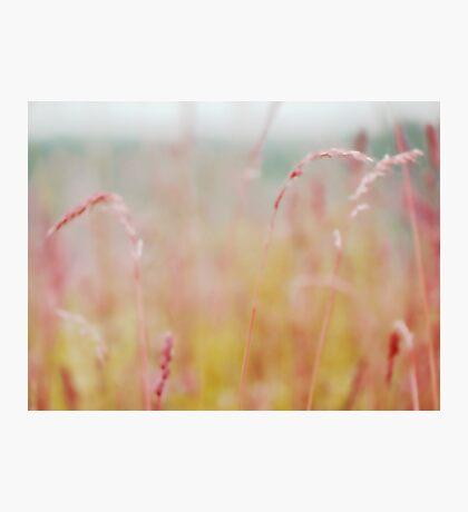 summer grass 15 Photographic Print