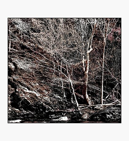 Nature's Other Mood Photographic Print
