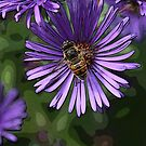 Busy Bee by Chappy