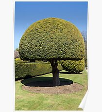 Topiary tree Poster