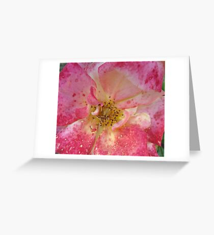 Strawberries & Cream #2 Greeting Card