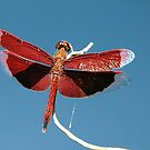 Red Dragonfly Blue Sky - Nature and Wildlife Original photo graphic design Merchandise by VIDDAtees