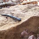Speckled Newt by Dalton Sayre
