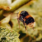 English Garden Bumble Bee - Nature and Wildlife Original photo graphic design Merchandise by VIDDAtees
