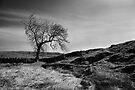 Above Skirethornes by SteveMG